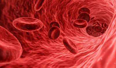 red cells flowing in a vein